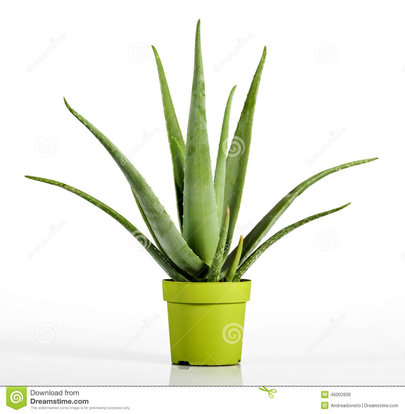 aloe vera plant on yellow green pot stock photo image. Black Bedroom Furniture Sets. Home Design Ideas