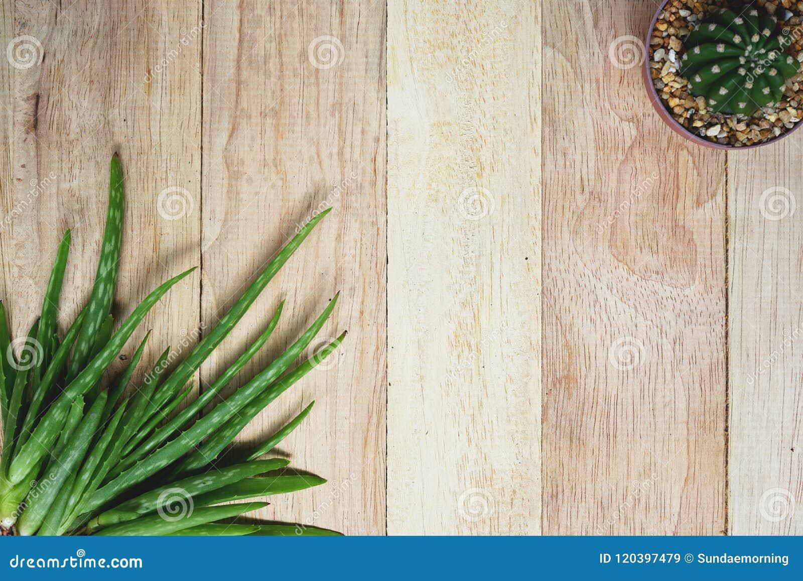 Aloes Vera i kaktus na drewnianym stołowym tle, kopii przestrzeń, skóry opieki pojęcie