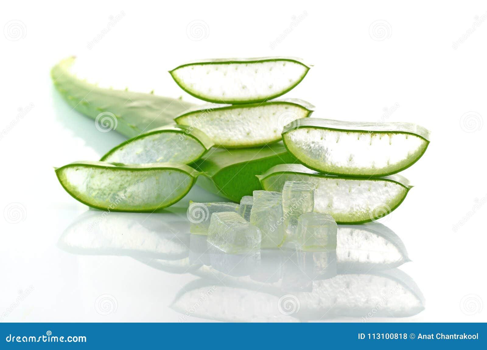 Aloesu Vera świeżego liścia odosobniony biały tło