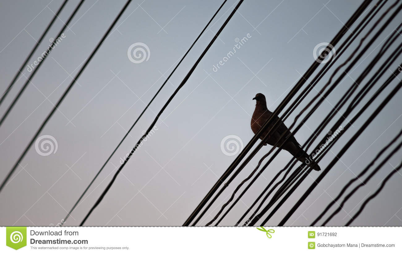 Alone Bird On Wire. Sunset Period Stock Photo - Image of object ...