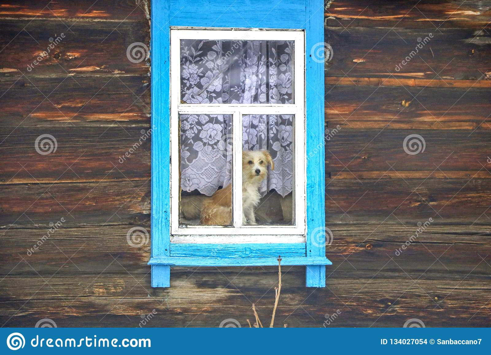 Dog in the window of a wooden house