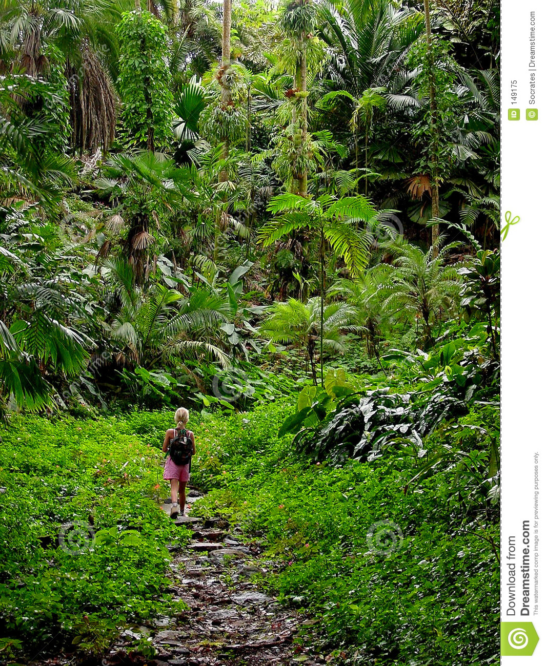 Alone In The Jungle Editorial Image. Image Of Tropical