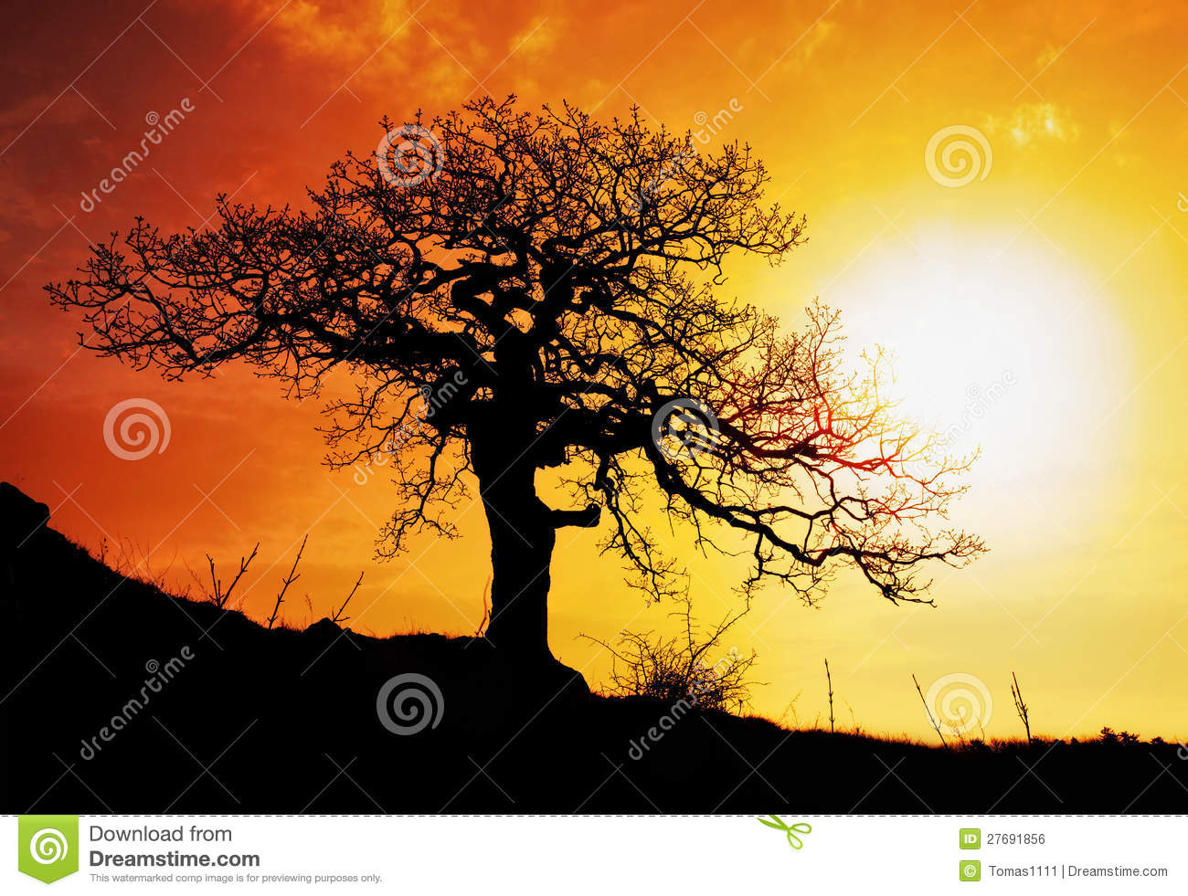 Alone tree with sun and color red orange sky