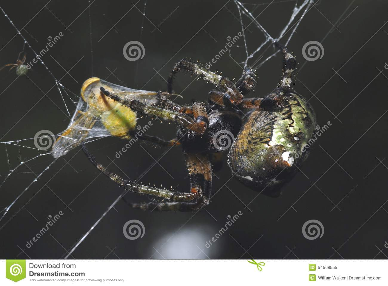 along came a spider download