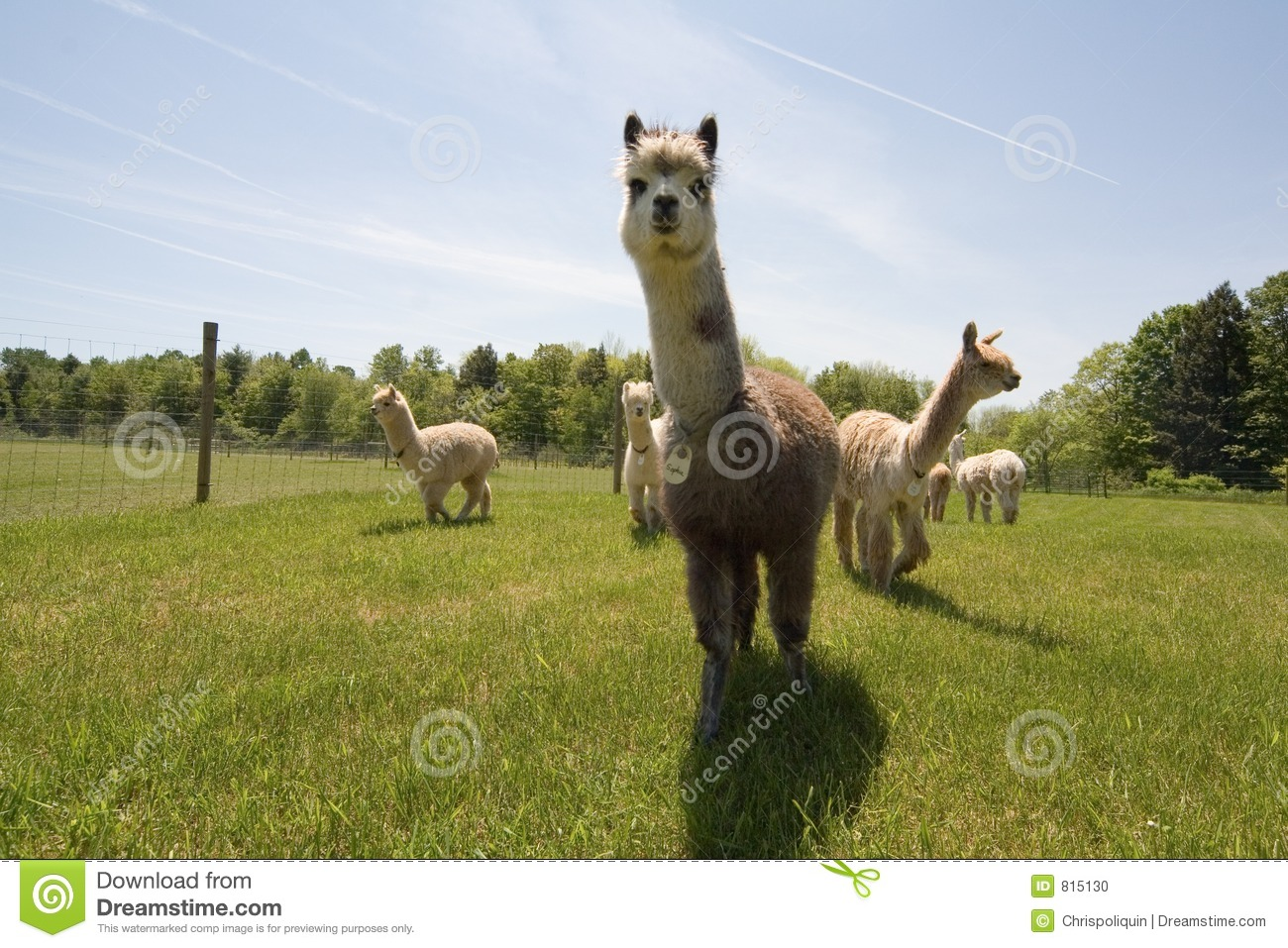 WELCOME TO ALPACANATION