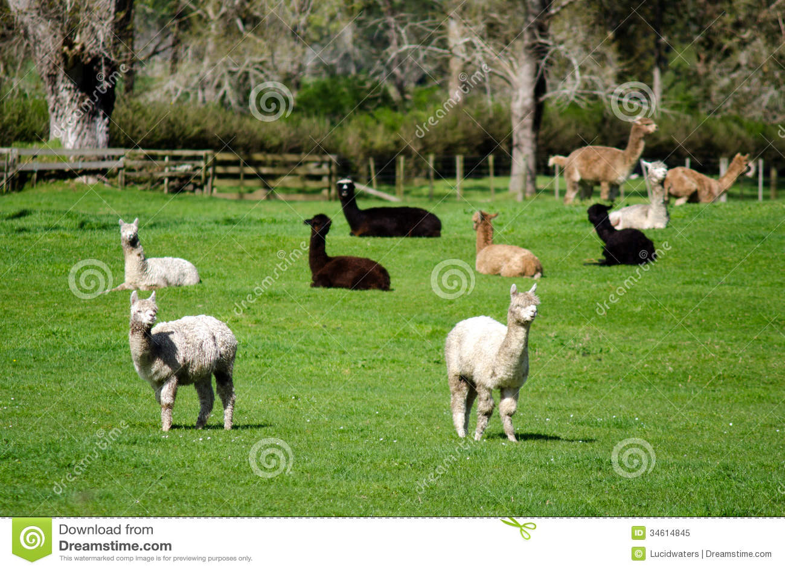 Alpacalandbouwbedrijf