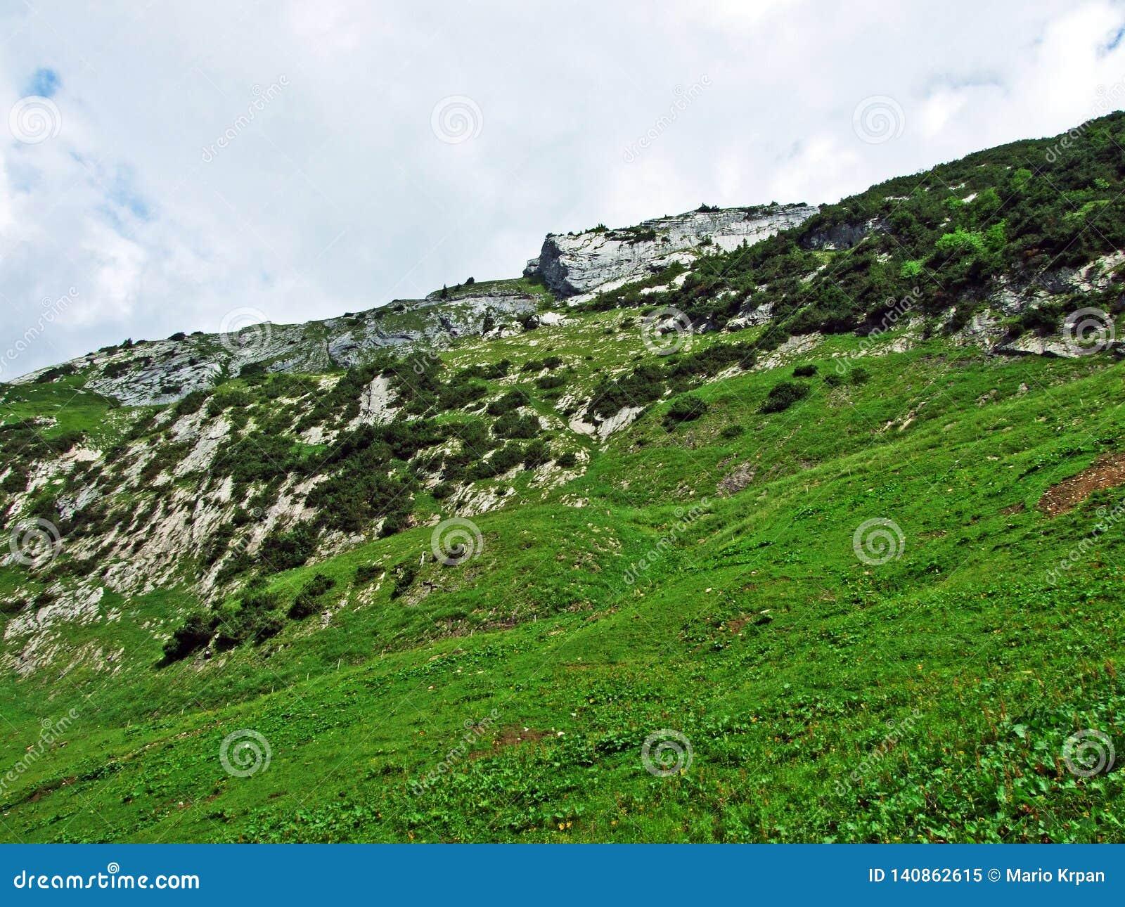 Alpejscy paśniki i łąki na skłonach Alpstein pasmo górskie w rzecznej Thur dolinie i