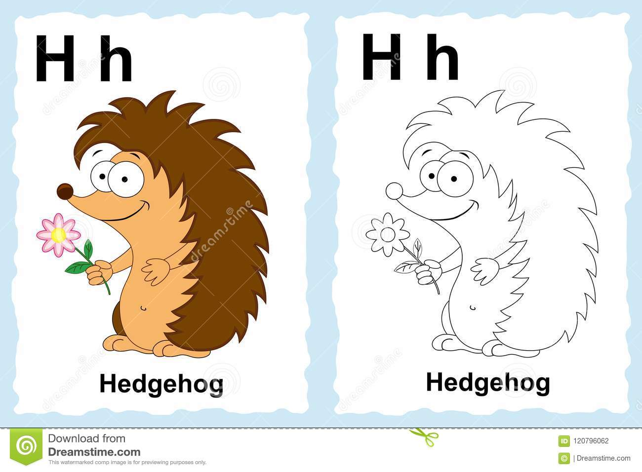 Alphabet coloring book page with outline clip art to color. Letter H.Hedgehog. Vector animals.