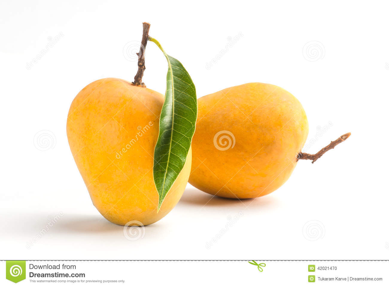 Download Alphonso Mango stock photo. Image of best, condiment - 42021470