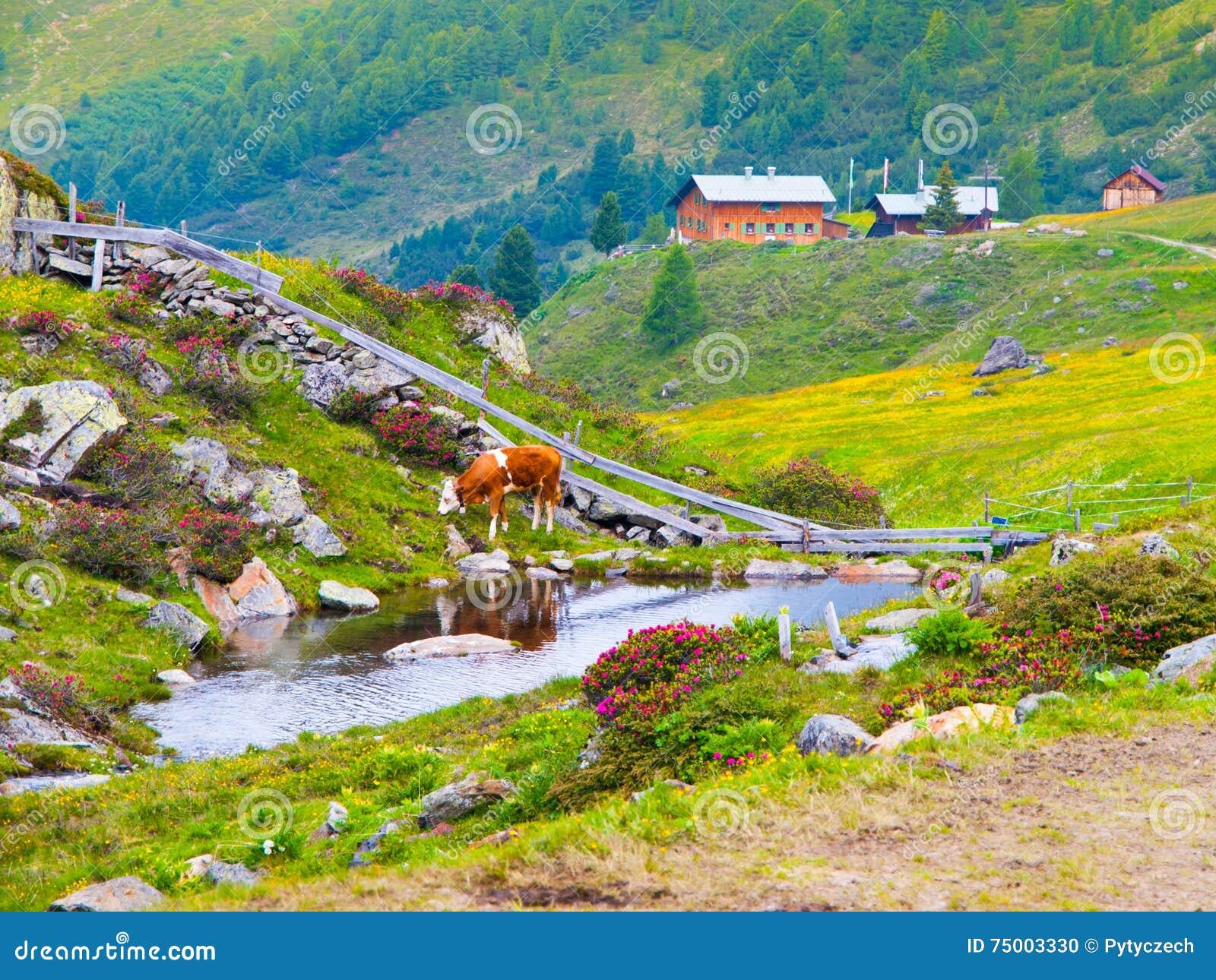 Alpien landschap met kreek, koe en mountinplattelandshuisje