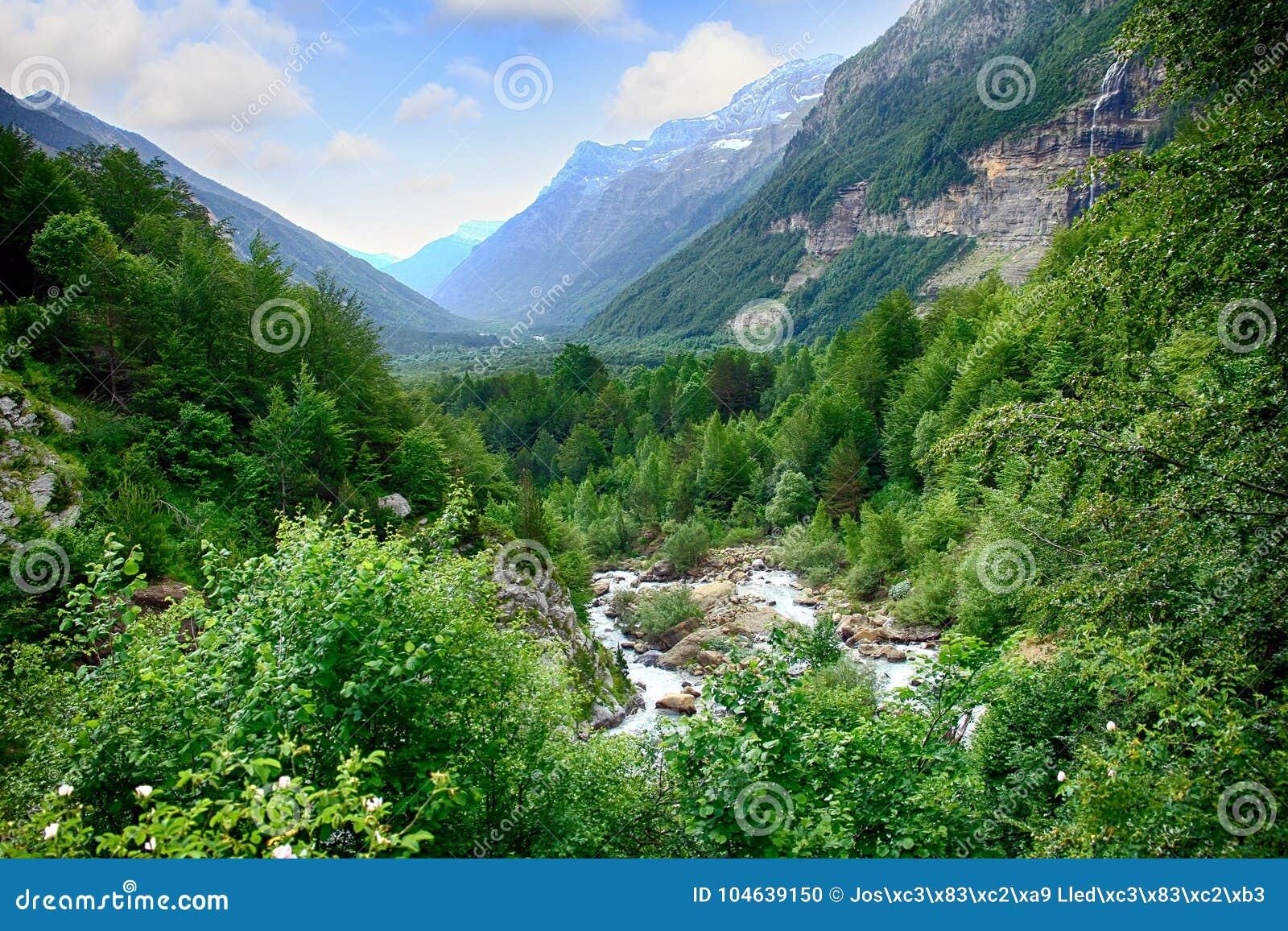 Download Alpien Ril En Mountainebos In Het Nationale Park Van Ordesa Stock Foto - Afbeelding bestaande uit park, genaturaliseerd: 104639150