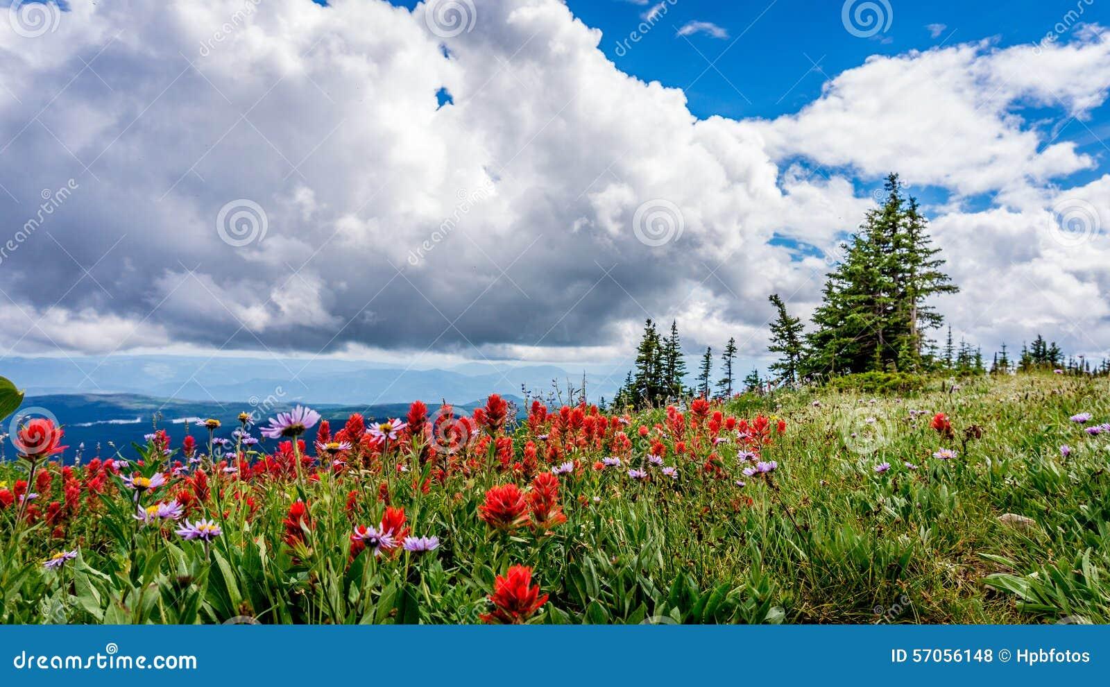 Alpiene Bloemen in Tod Mountain