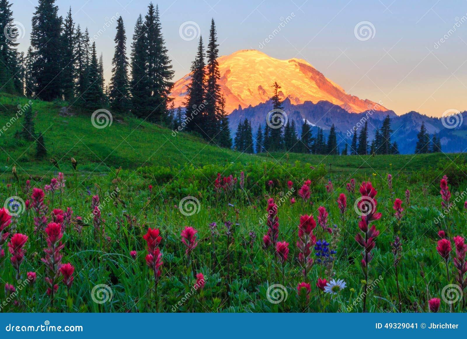 Alpiene Gloed op MT Regenachtiger, Washington State