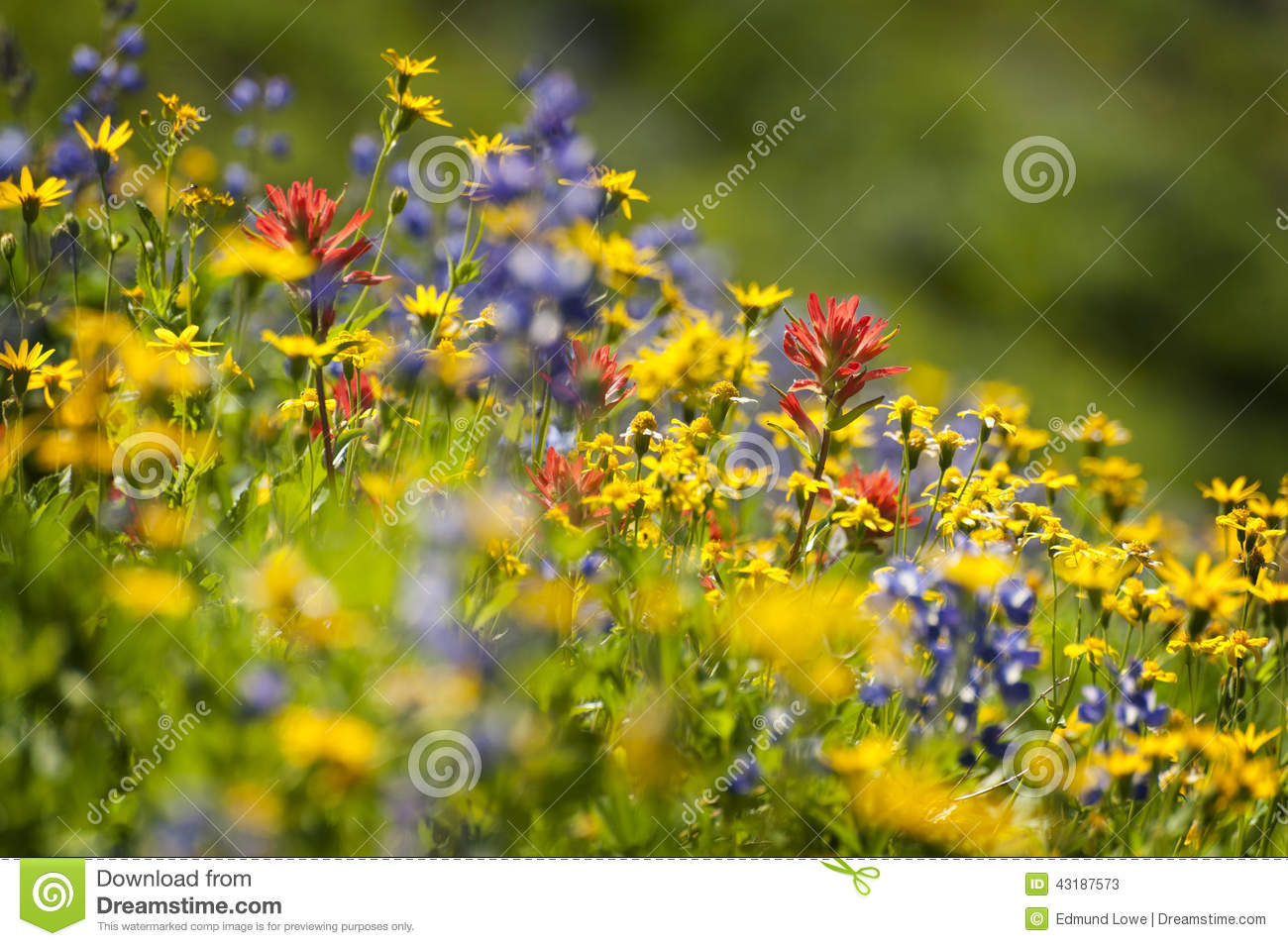 Alpiene wildflowers