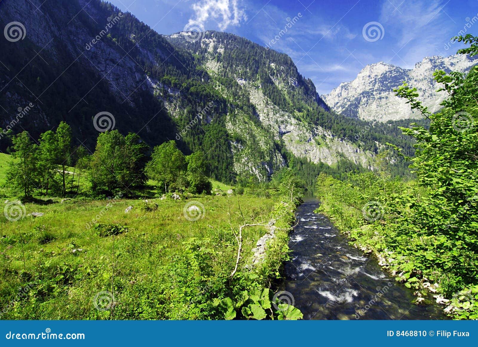 Alpin bäck