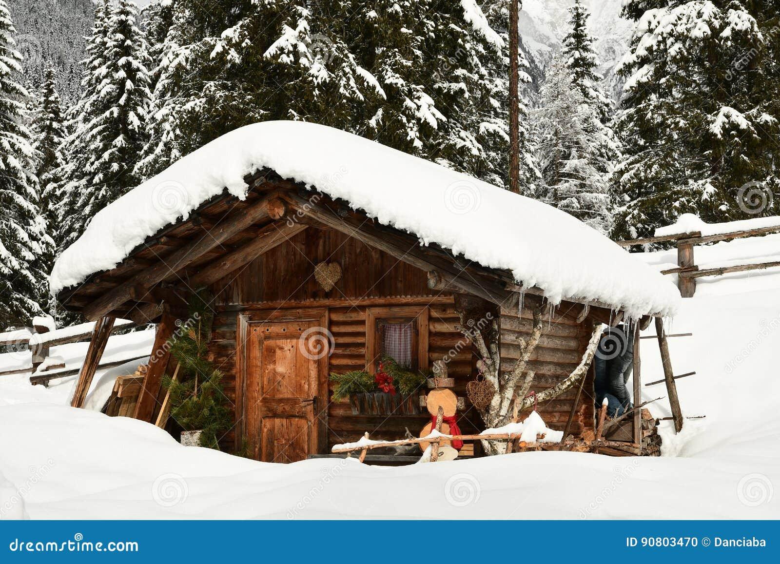 Alpin koja i vinter i fjällängarna Övervintra landskapet i en skog nära sjön Antholz Anterselva, södra Tirol