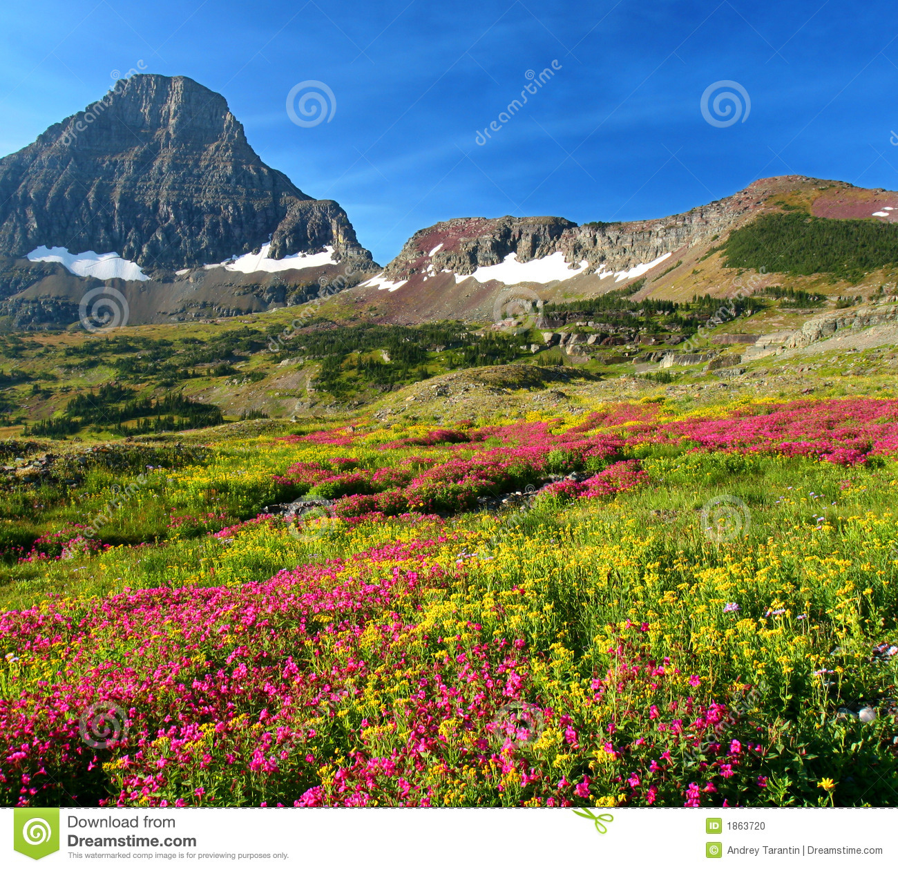 Alpine Meadows Stock Photo Image 1863720