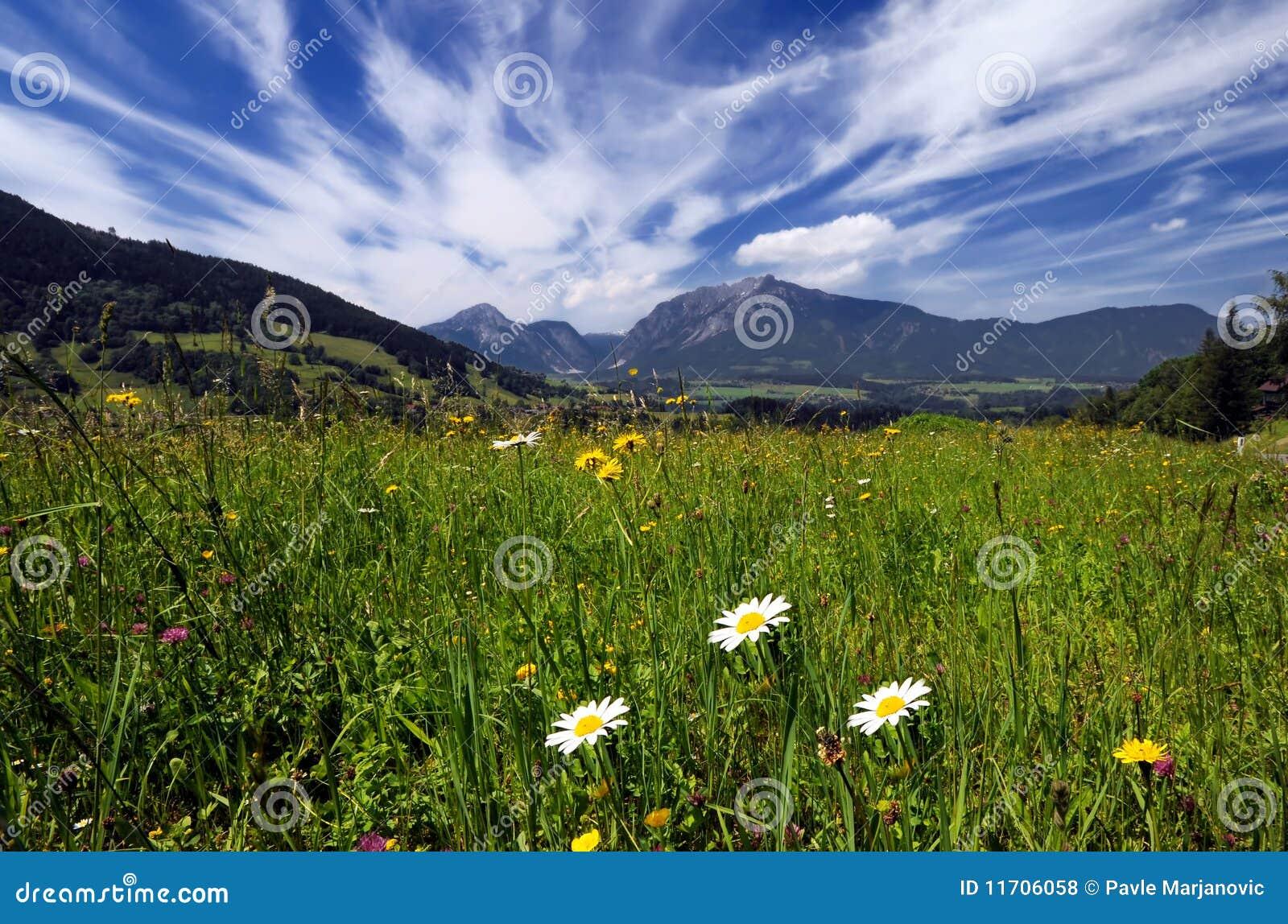 Alps poly łąki
