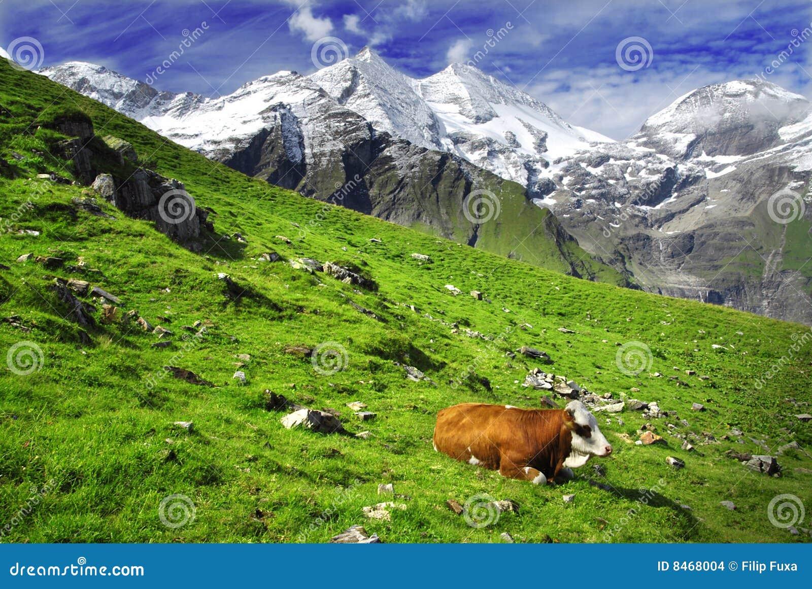 Alpskor