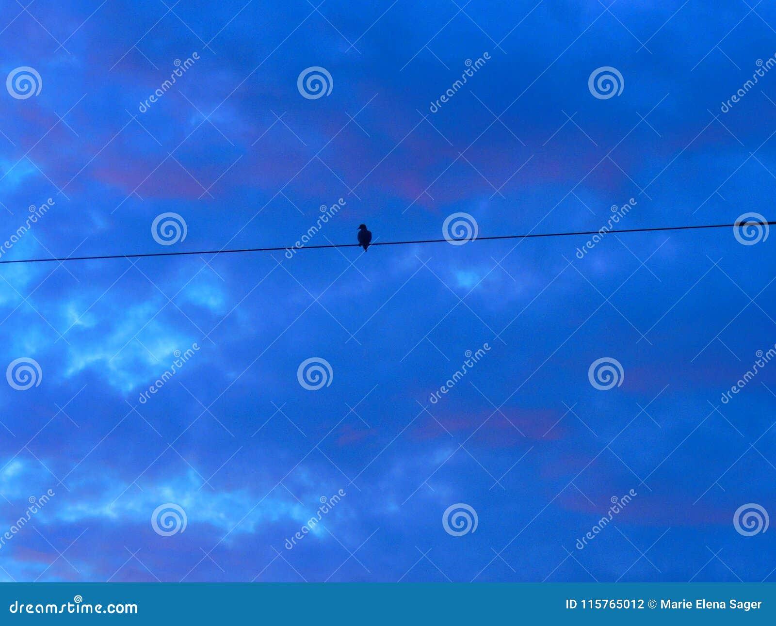 Als een Vogel op een Draad