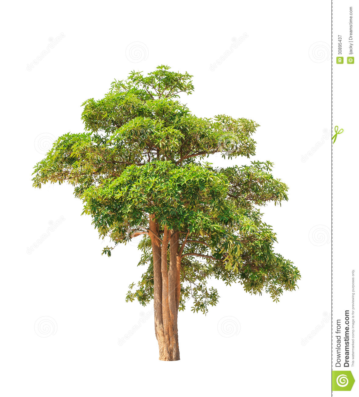 white pine hindu personals The great white pine has always been my favorite tree when i  healing power of the great white pine  hindu cultures call this prana, .