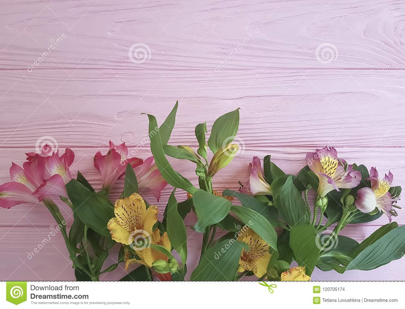 Alstroemeria Anniversary Freshness Vintage Greetings On A Pink