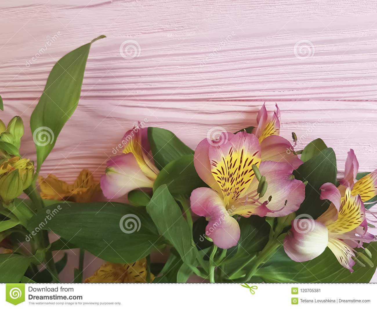 Alstroemeria Anniversary Vintage Greetings On A Pink Wooden Frame