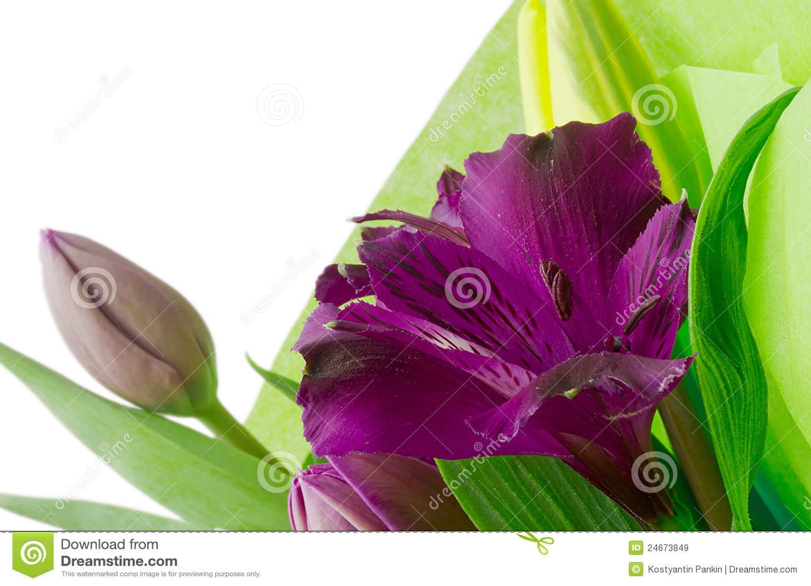 Alstroemeria blommar purple