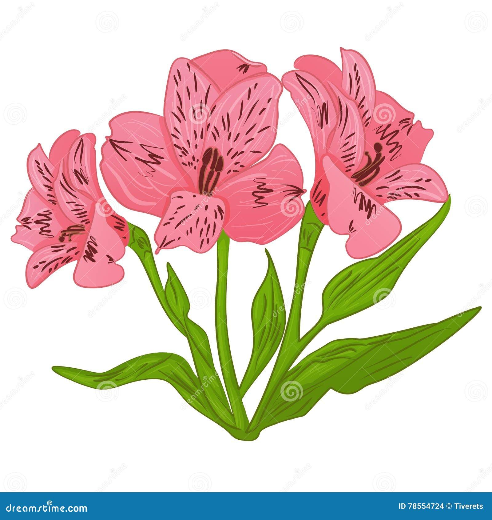 Alstroemeria cartoon pink flower and green leaves vector stock alstroemeria cartoon pink flower and green leaves vector stock vector illustration of background beautiful 78554724 izmirmasajfo
