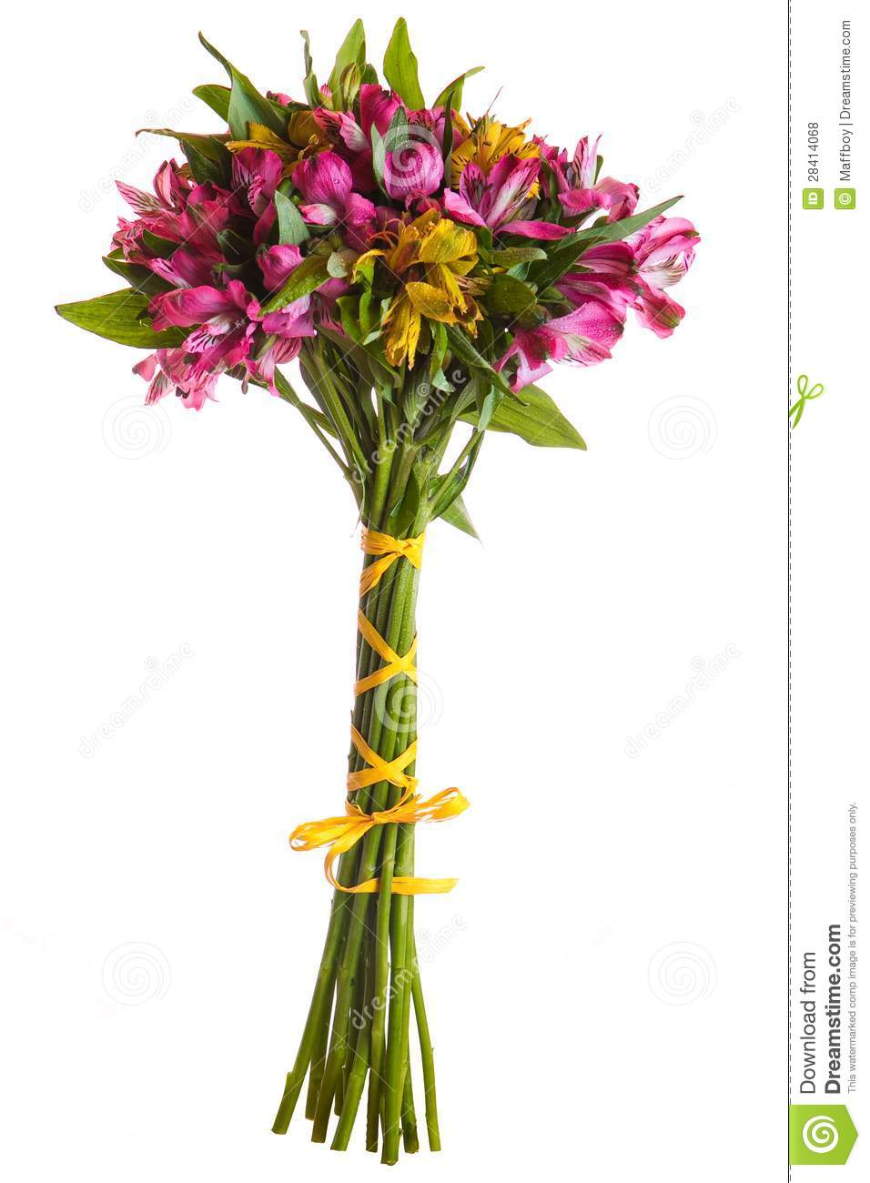Alstroemeria Flowers Bouquet Isolated Stock Photo Image Of Green