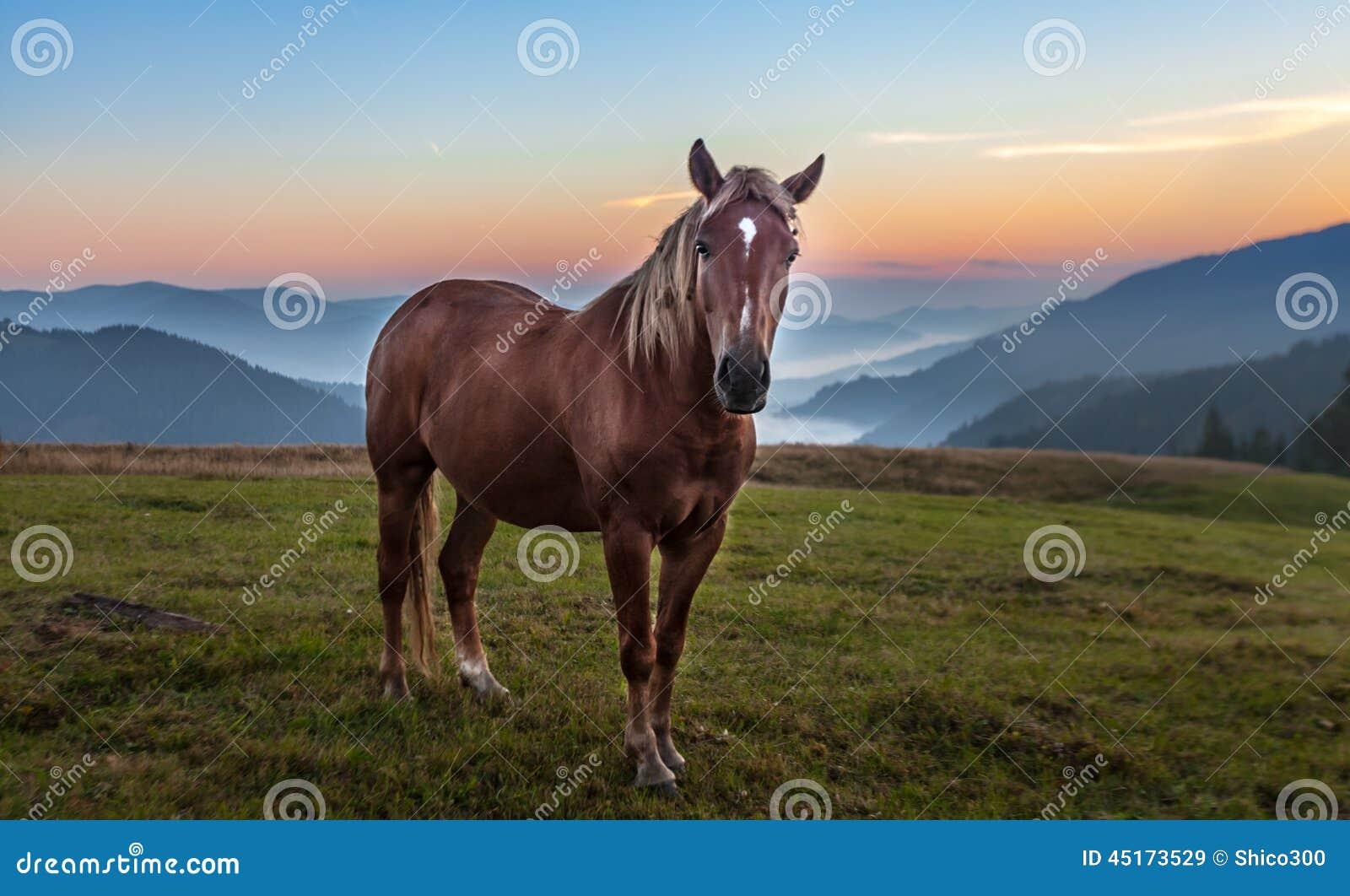 Altai pastwiskowa konia krajobrazu góra Russia