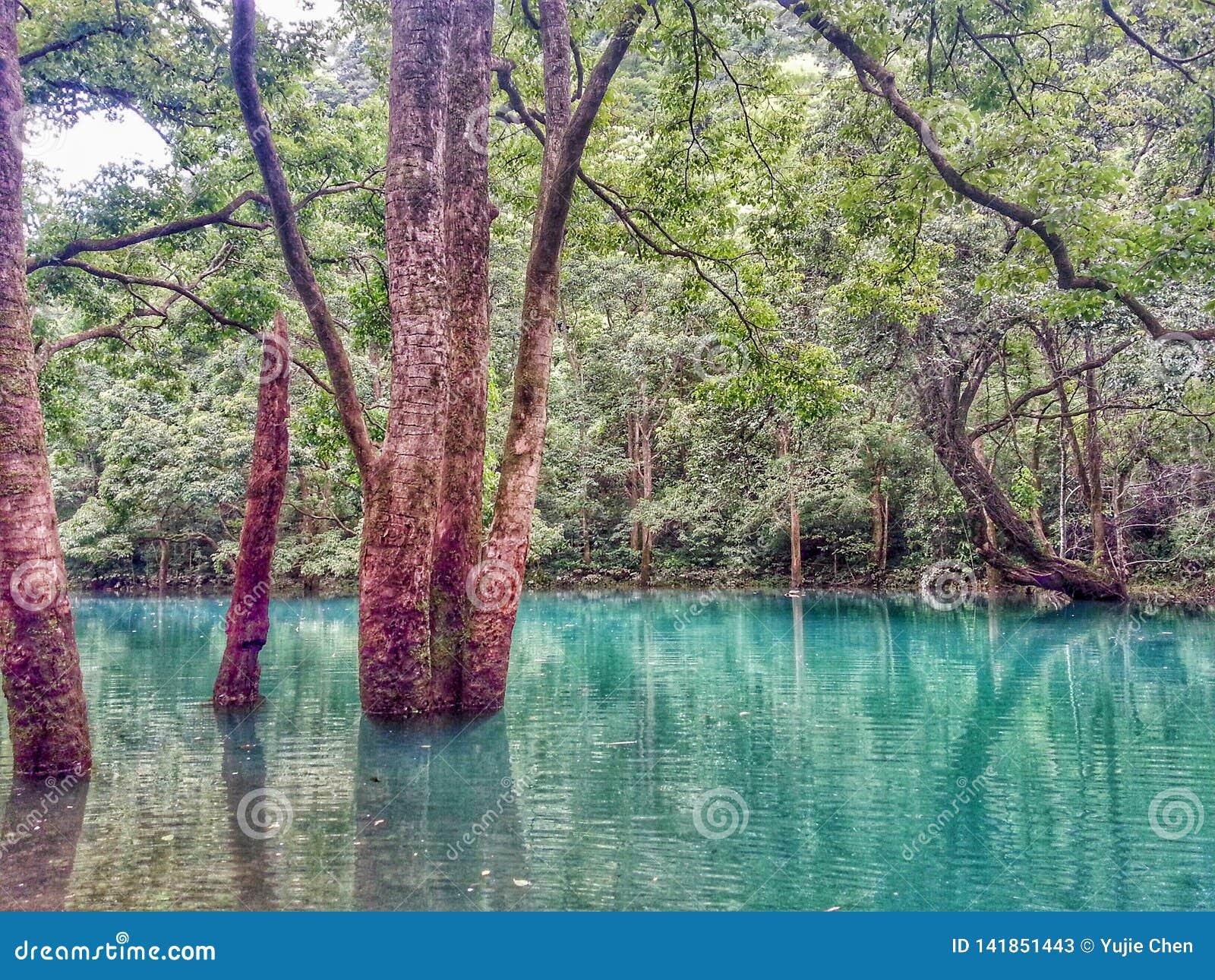 Alte Bäume, die im Wasser, Libo wachsen