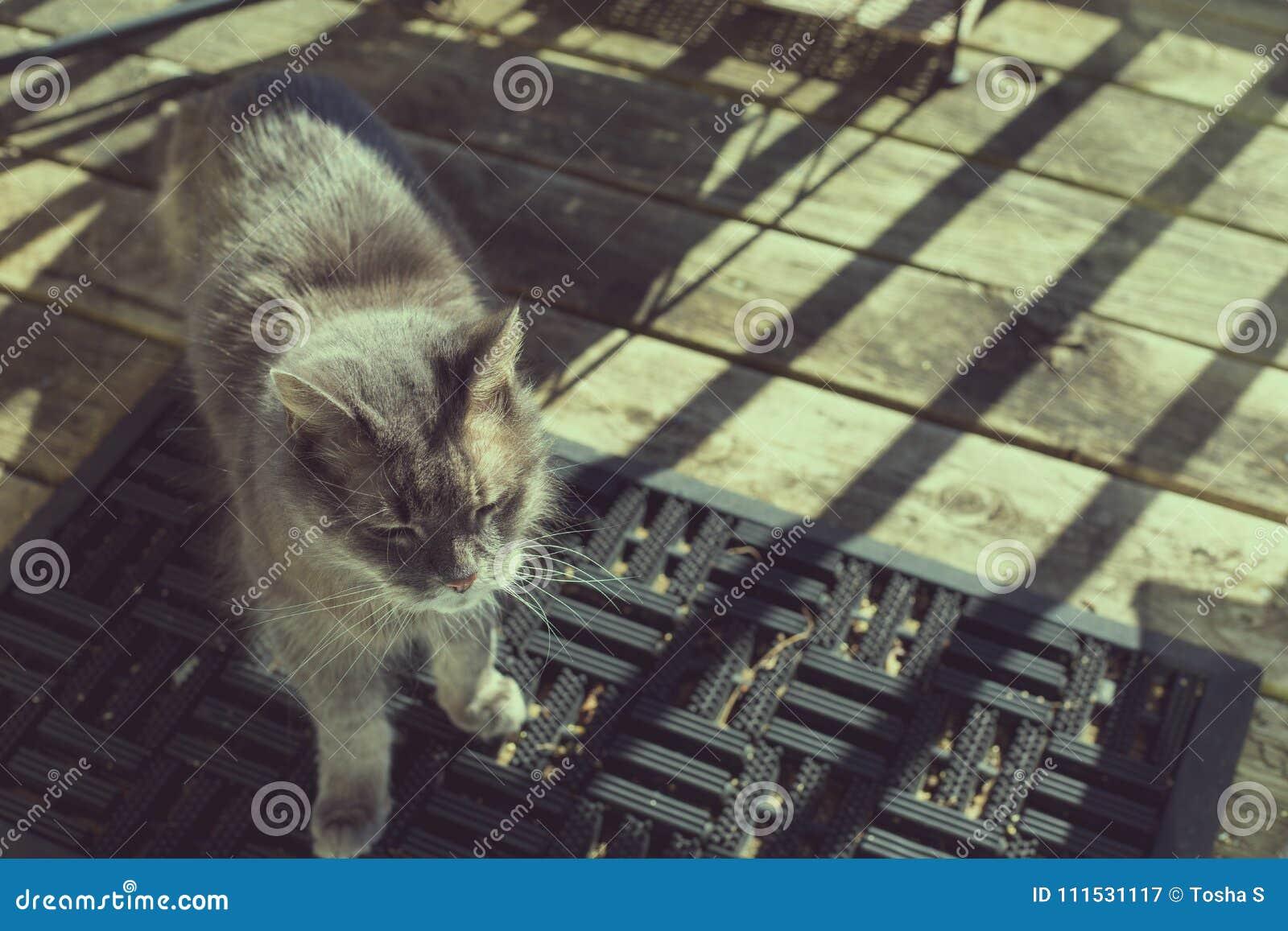 Alte graue Katze, die in der Sonne auf Portal badet