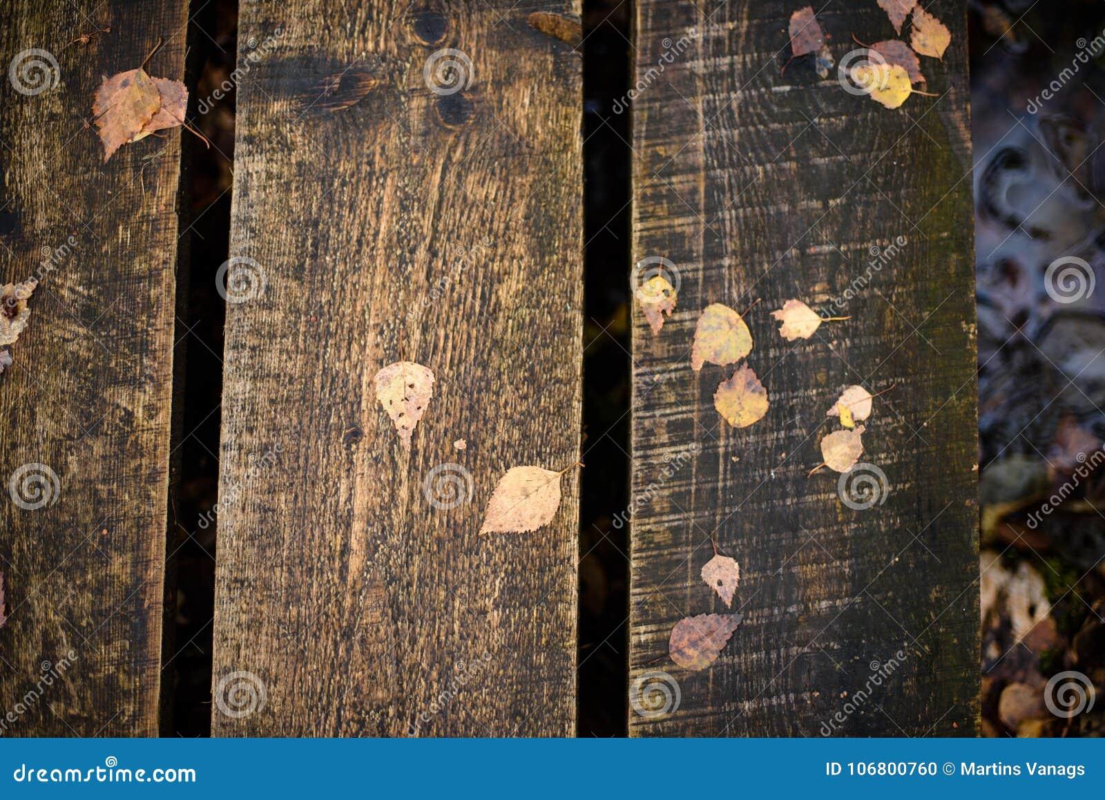 Download Alte Hölzerne Promenade Bedeckt Mit Blättern Im Alten Wald Stockfoto - Bild von moos, ökologie: 106800760