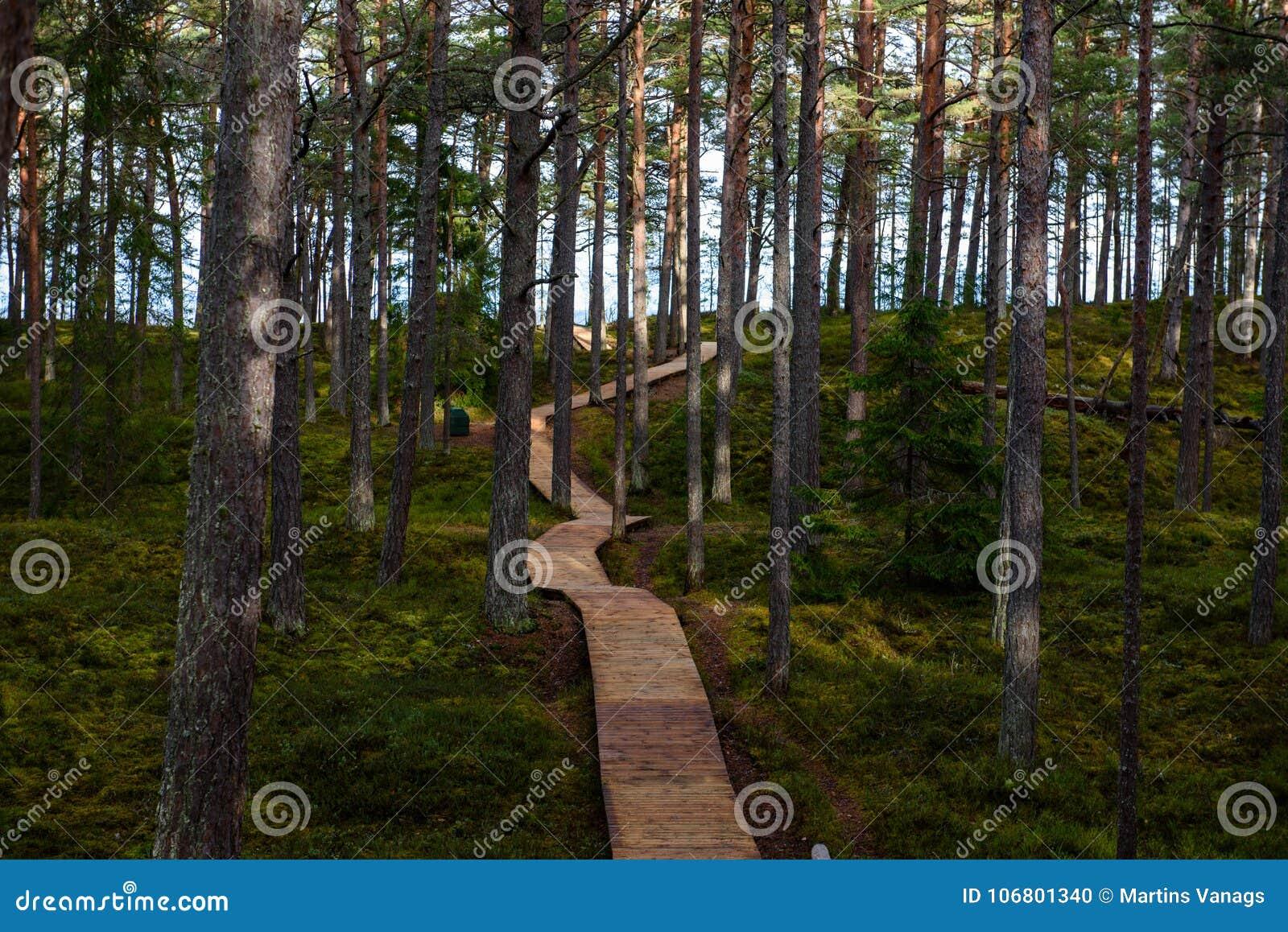 Download Alte Hölzerne Promenade Bedeckt Mit Blättern Im Alten Wald Stockfoto - Bild von landschaft, horizont: 106801340
