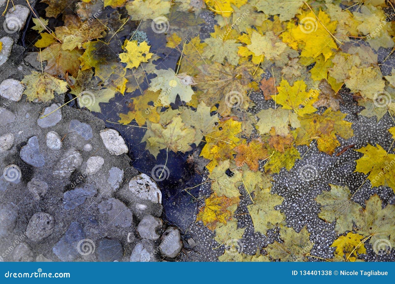 Alte Kopfsteinstraße mit gelben Blättern des Herbstes und schlammiger Pfütze - feuchtes Konzept des Hintergrundherbst-Falles - li