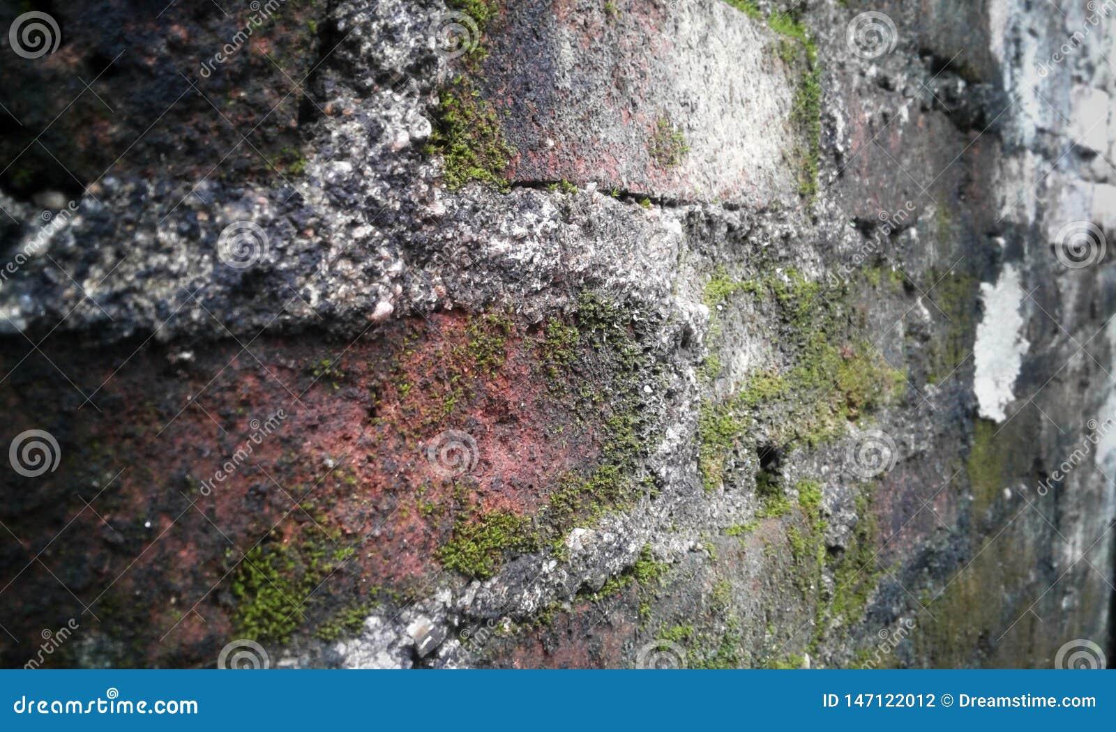 Alte Wand des roten Backsteins mit Pilz auf ihm
