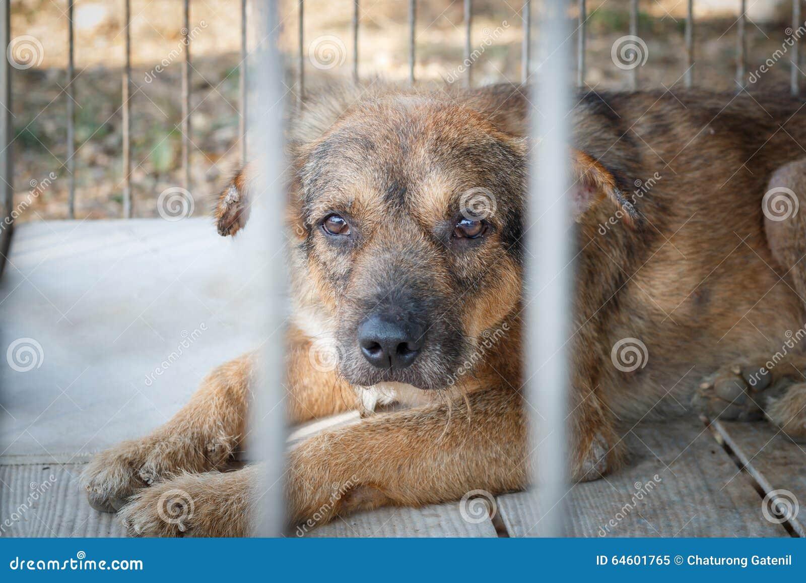 Alter Hund des Mitleids