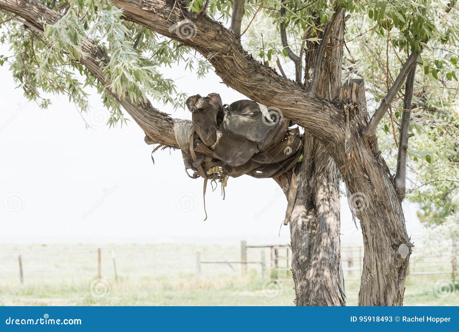 Alter Sattel in einem Baum auf einer historischen Ranch in ländlichem Colorado