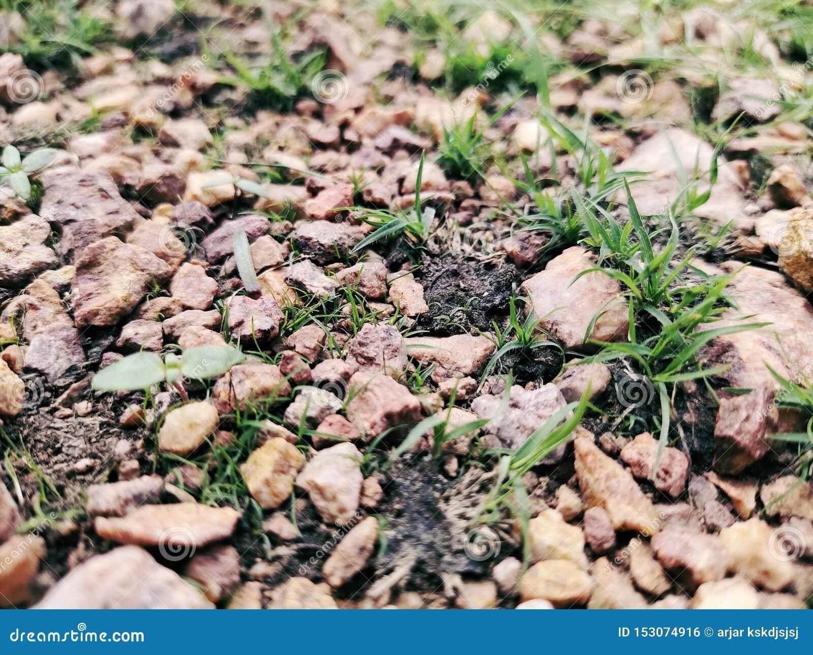 Alter Stein mit grünem Gras Hintergrund, Gras