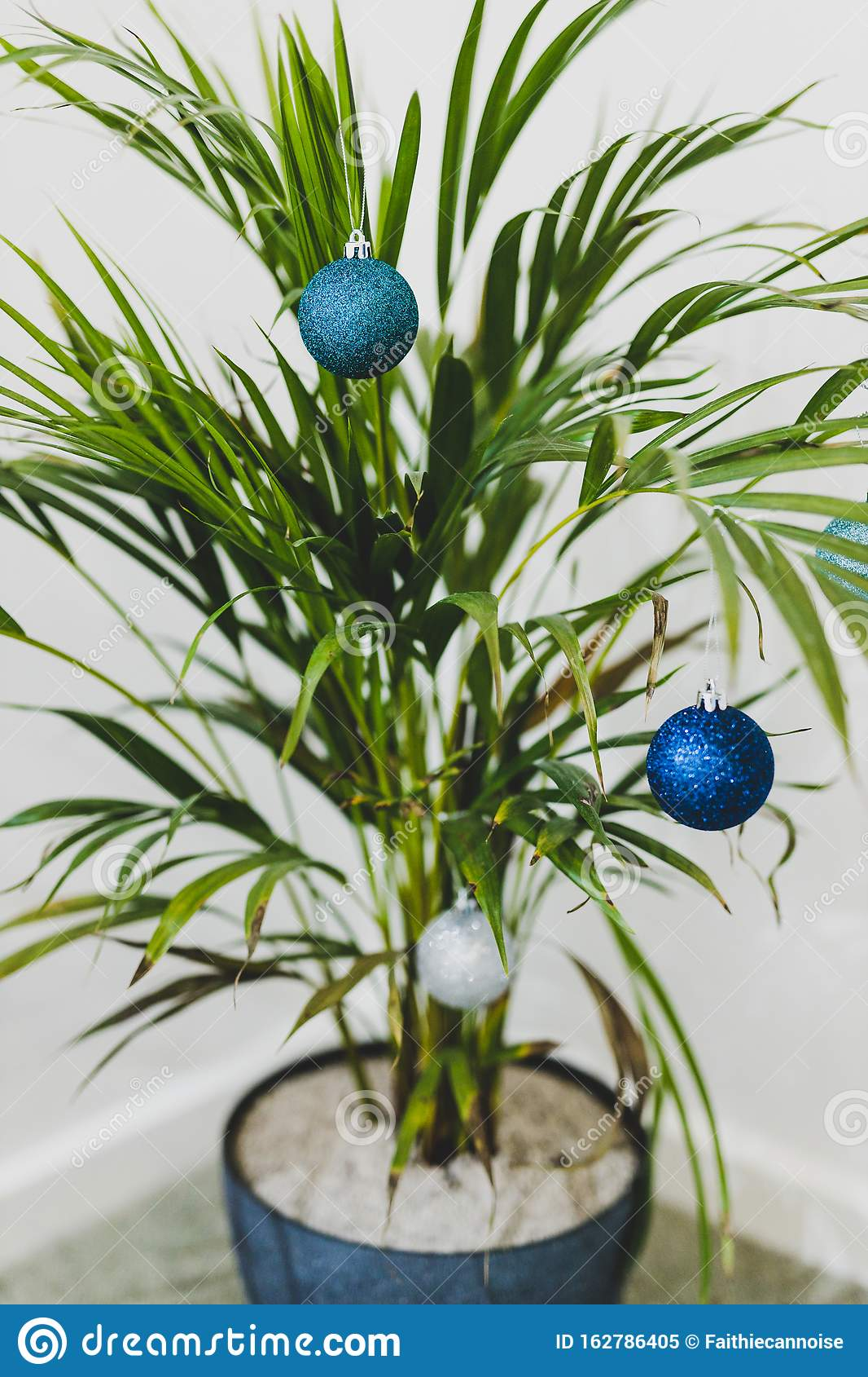 Alternative Christmas Tree Palm Plant With Christmas Baubles For The Festive Season In Summer For The Southern Hemisphere Stock Image Image Of Warm Celebration 162786405