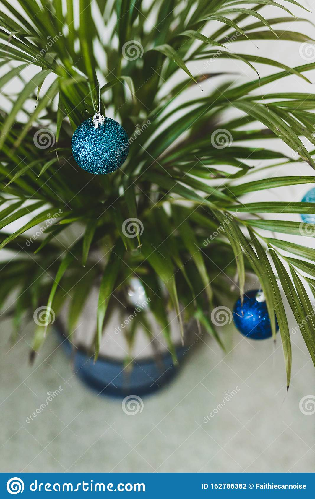 Alternative Christmas Tree Palm Plant With Christmas Baubles For The Festive Season In Summer For The Southern Hemisphere Stock Photo Image Of Tree Light 162786382