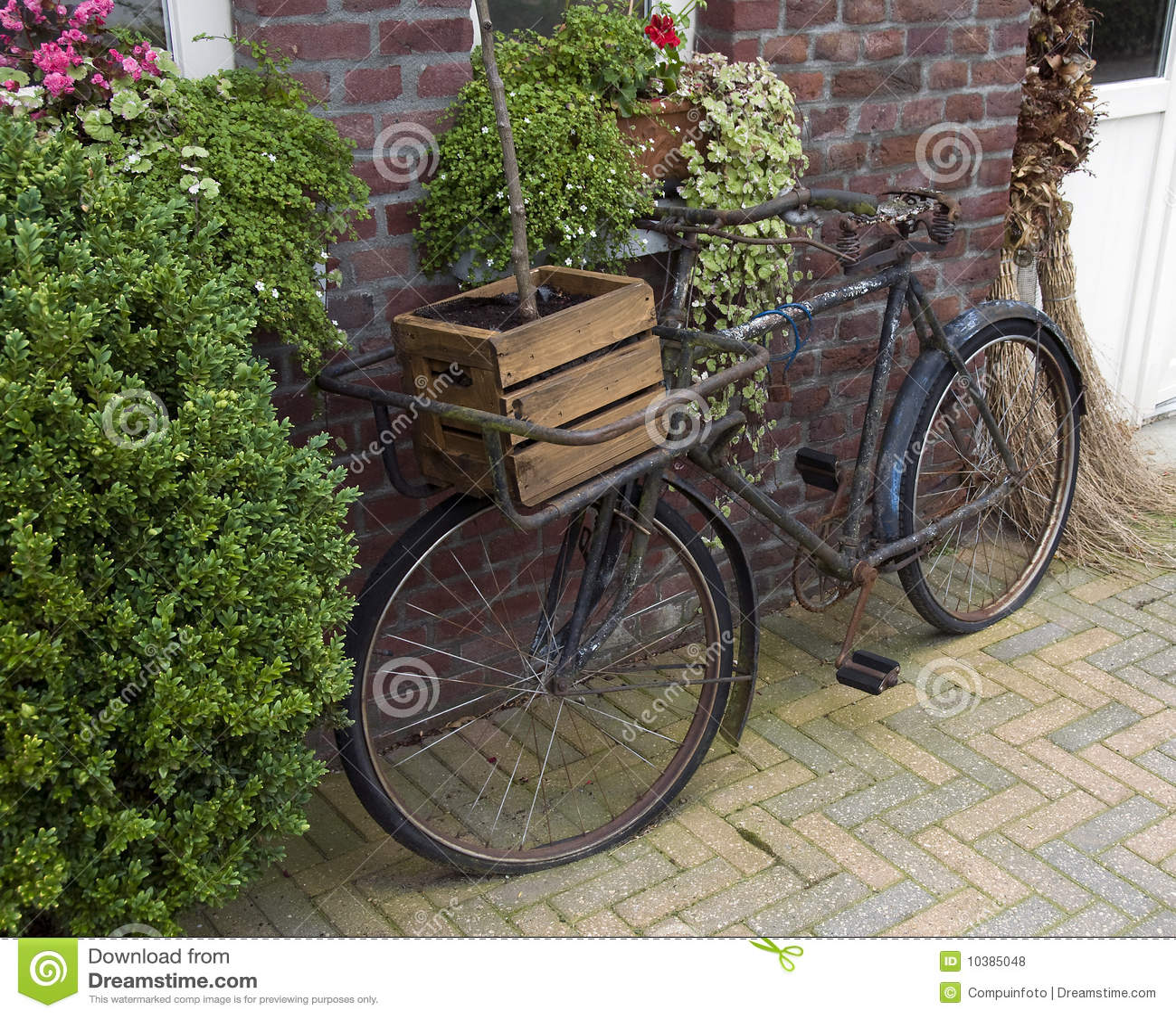 altes fahrrad stockfoto bild von blatt immergr n antike 10385048. Black Bedroom Furniture Sets. Home Design Ideas