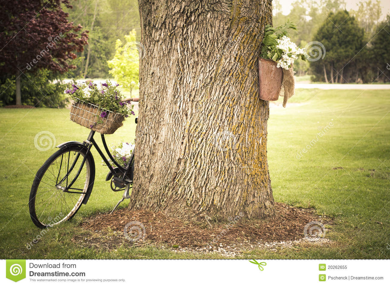 altes fahrrad mit den blumen die am baum sich lehnen lizenzfreies stockfoto bild 20262655. Black Bedroom Furniture Sets. Home Design Ideas