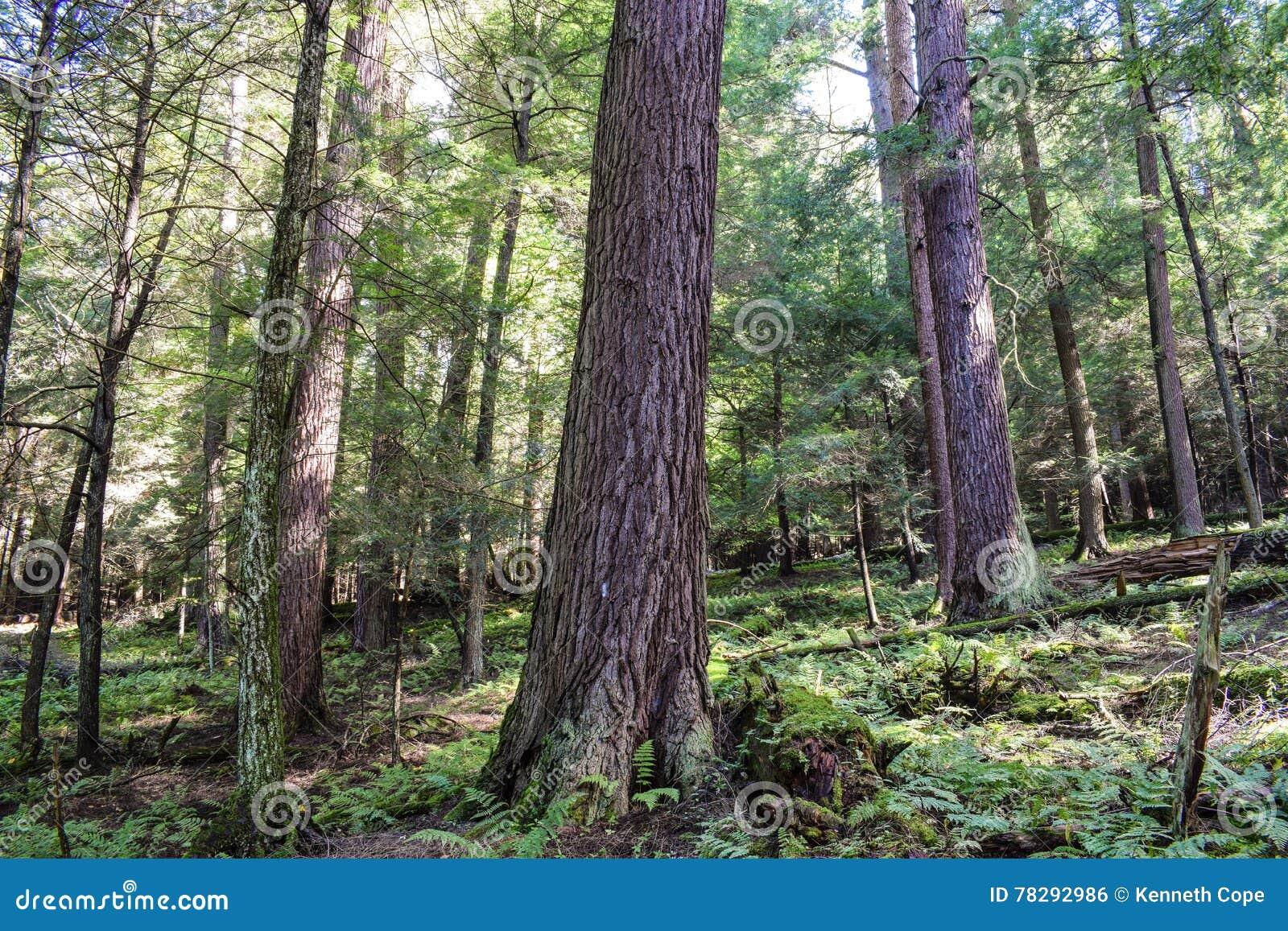 Altes Wachstum-Wald