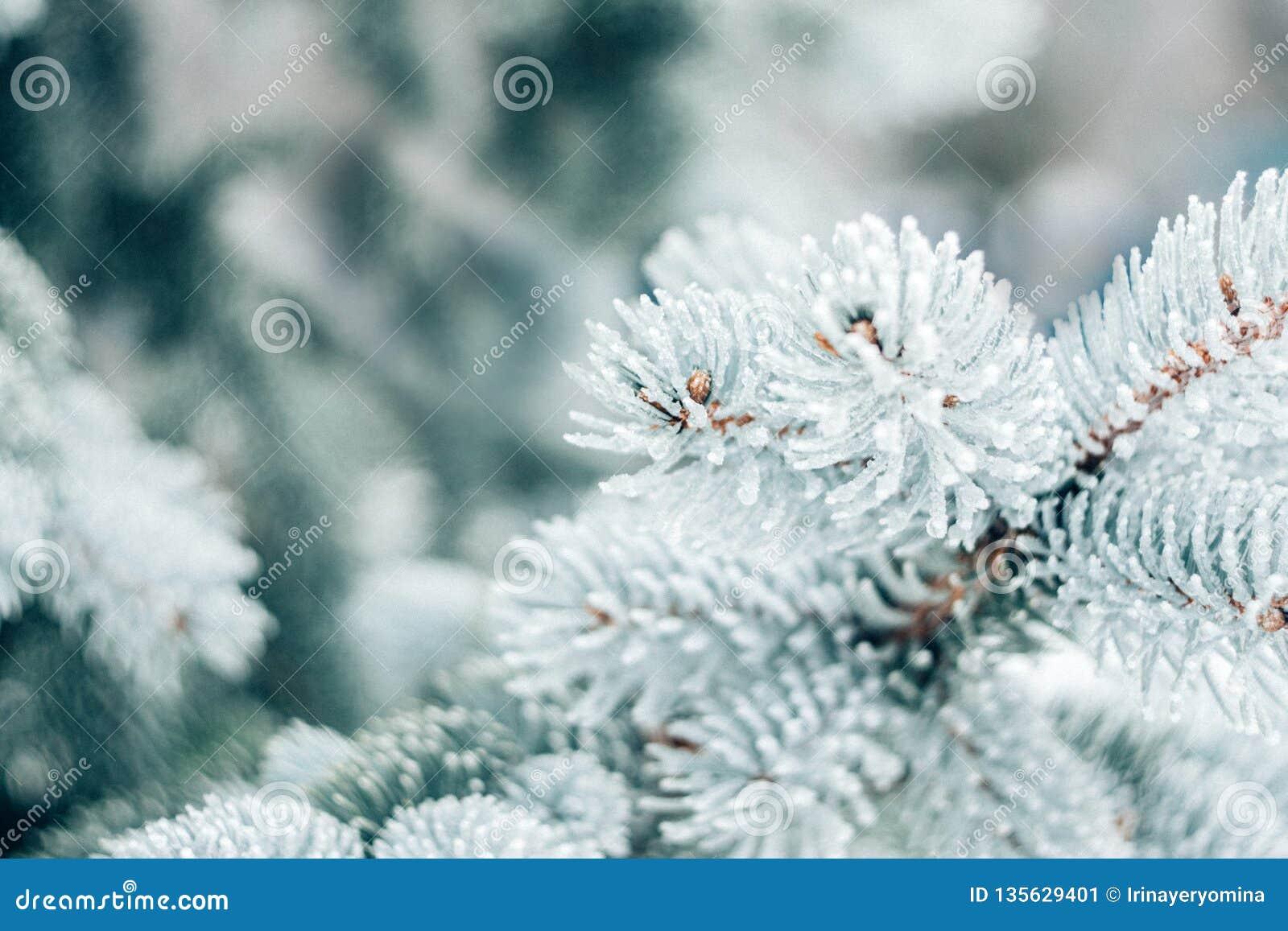 Altijdgroene de boomachtergrond van de winterkerstmis Het ijs behandelde blauwe nette tak dichte omhooggaand Vorsttak van spar me