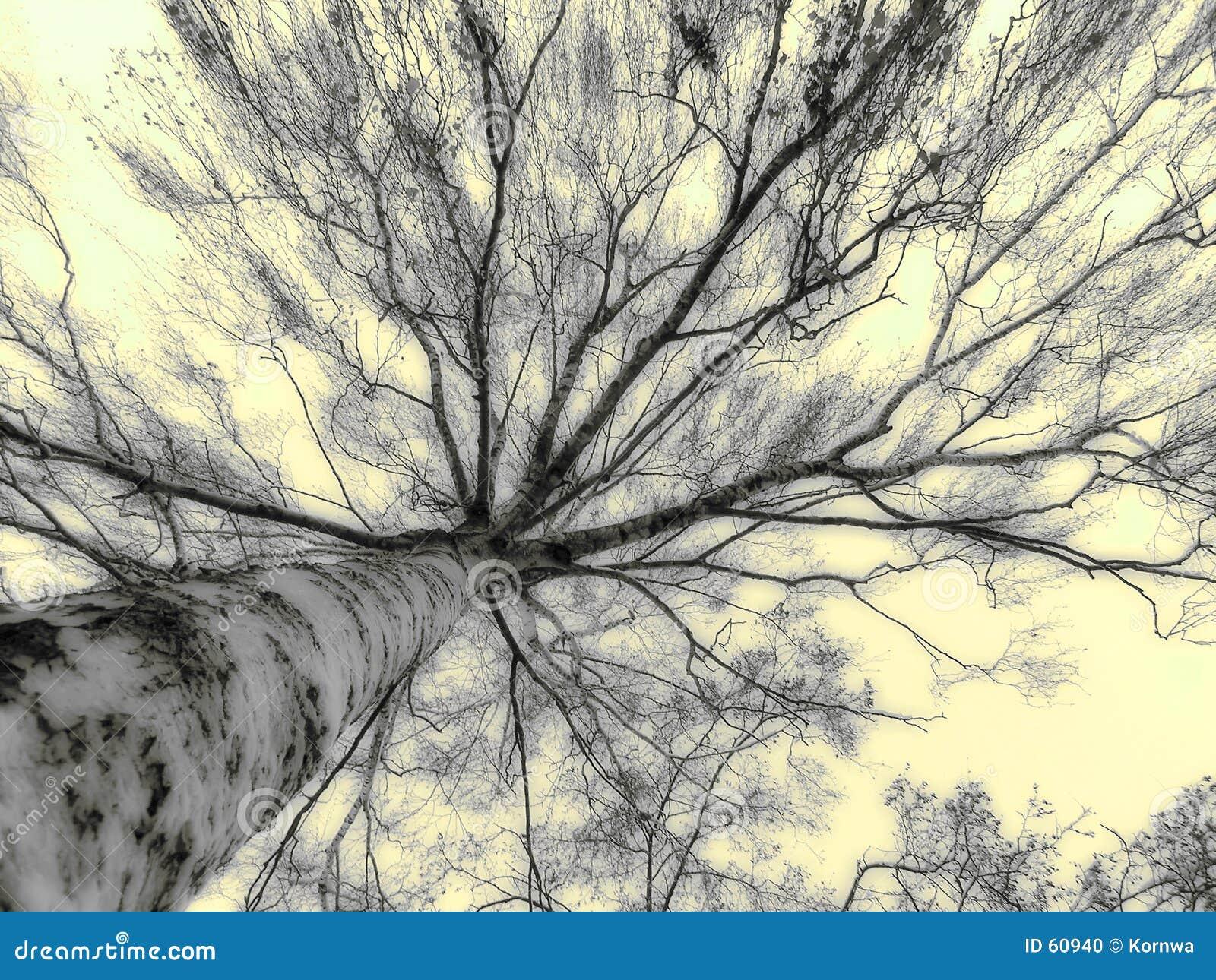 Alto árbol
