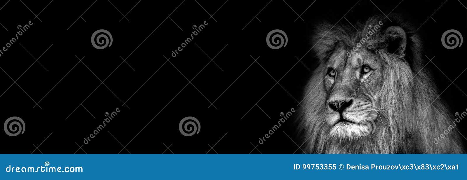 Alto contraste blanco y negro de una cara africana masculina del león