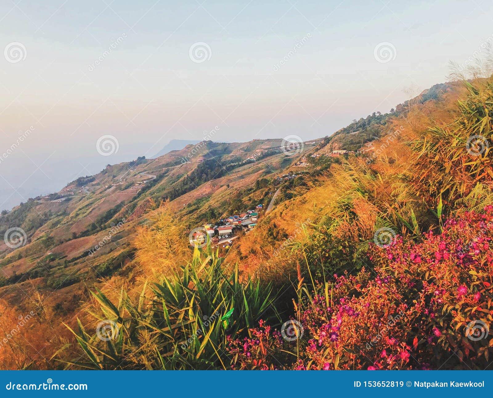 Alto Mountain View