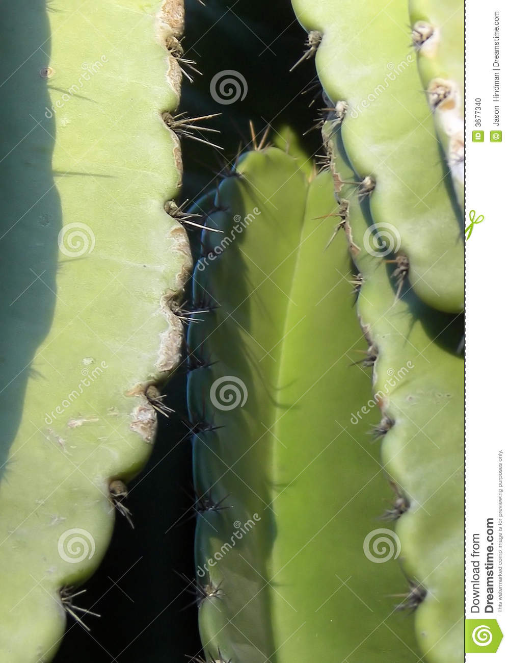 Download Alto vicino del cactus fotografia stock. Immagine di colline - 3677340